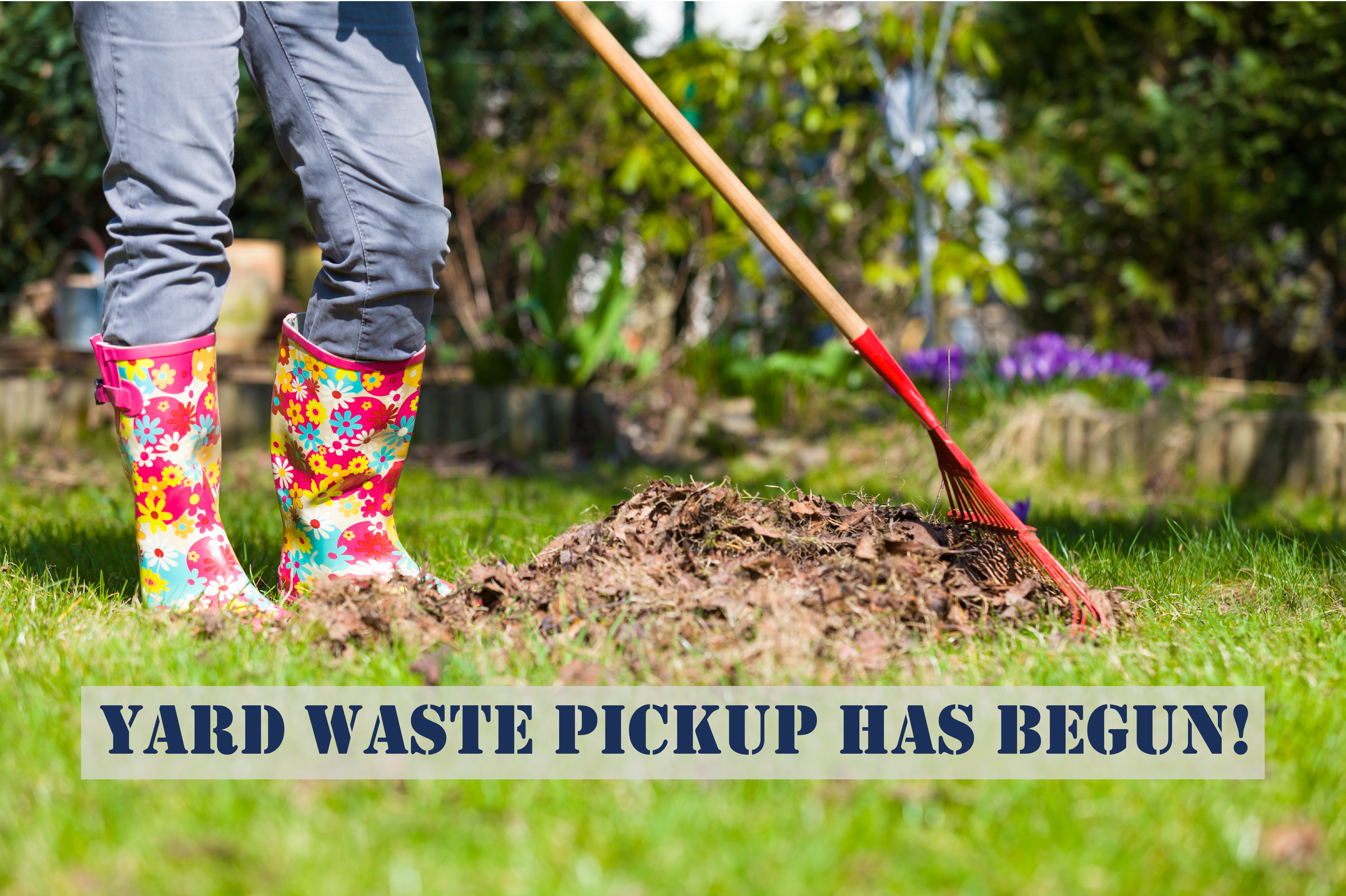 yard waste pickup spotlight