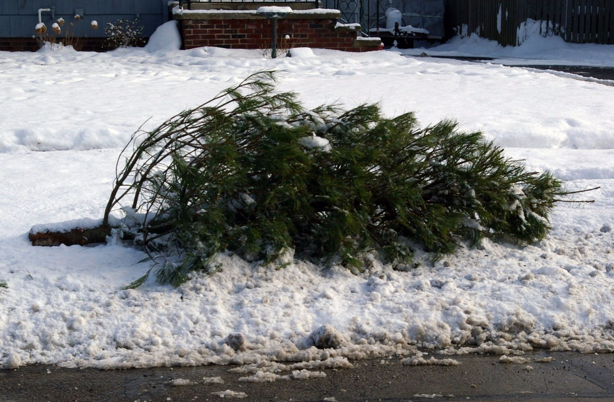 recycling_christmas_trees